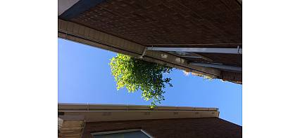 I've got a tree growing in my gutter